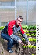 Купить «The farmer weeds the radishes in the greenhouse», фото № 27129553, снято 15 мая 2016 г. (c) Евгений Ткачёв / Фотобанк Лори