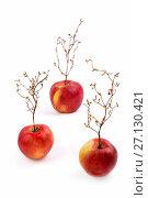 Купить «Три спелых красных яблок с растением похожим на дерево», фото № 27130421, снято 20 октября 2017 г. (c) V.Ivantsov / Фотобанк Лори