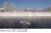 Купить «Geese on Altai river near village Talitsa in winter», видеоролик № 27132229, снято 29 января 2017 г. (c) Serg Zastavkin / Фотобанк Лори
