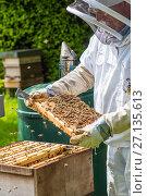 Купить «Beekeeper inspecting brood chamber on a honey bee hive. Norfolk, England, June 2017.», фото № 27135613, снято 18 августа 2018 г. (c) Nature Picture Library / Фотобанк Лори