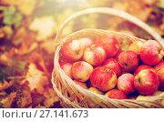 Купить «wicker basket of ripe red apples at autumn garden», фото № 27141673, снято 12 октября 2016 г. (c) Syda Productions / Фотобанк Лори