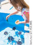 Купить «Adorable little girl feeds turtles in the natural reserve», фото № 27153985, снято 10 апреля 2017 г. (c) Дмитрий Травников / Фотобанк Лори