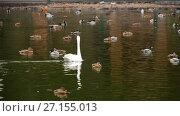 Купить «Wild waterfowl on the pond», видеоролик № 27155013, снято 21 октября 2017 г. (c) Игорь Жоров / Фотобанк Лори