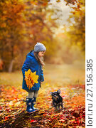 Купить «Girl with bouquet of maple leaves and Chihuahua dog in autumn park», фото № 27156385, снято 7 октября 2017 г. (c) Julia Shepeleva / Фотобанк Лори