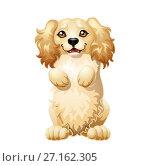 Купить «Милый щенок Кокер Спаниеля бежевого палевого цвета встал на задние лапки. Иллюстрация в мультипликационном стиле. Изолированно на белом фоне.», иллюстрация № 27162305 (c) Анастасия Некрасова / Фотобанк Лори