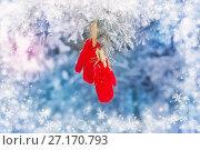 Купить «red mittens on winter pine tree», фото № 27170793, снято 24 января 2016 г. (c) Майя Крученкова / Фотобанк Лори