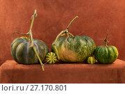 Купить «Натюрморт с пятью спелыми тыквами на коричневом фоне», фото № 27170801, снято 28 октября 2017 г. (c) V.Ivantsov / Фотобанк Лори