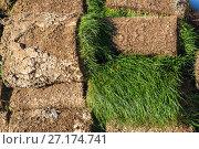 Купить «The rolled lawn folded in stacks outdoors», фото № 27174741, снято 2 ноября 2017 г. (c) Володина Ольга / Фотобанк Лори