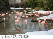 Купить «Стая розовых фламинго зимой в зоопарке», фото № 27178829, снято 8 февраля 2010 г. (c) Юлия Бабкина / Фотобанк Лори