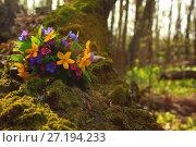 Букет весенних цветов на стволе упавшего дерева покрытого мхом. Стоковое фото, фотограф Юлия Болоцкая / Фотобанк Лори