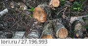 Купить «Сваленные в кучу распиленные бревна березы», фото № 27196993, снято 4 мая 2016 г. (c) Алёшина Оксана / Фотобанк Лори