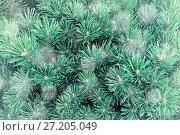Купить «Winter landscape background. Winter pine tree green branches under falling snowflakes», фото № 27205049, снято 13 августа 2016 г. (c) Зезелина Марина / Фотобанк Лори