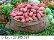 Купить «Молодой картофель в мешке», фото № 27205629, снято 5 июля 2017 г. (c) Ольга Сейфутдинова / Фотобанк Лори