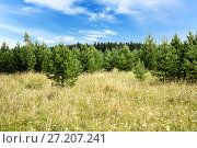 Купить «Green meadow blue sky with clouds and edge of forest», фото № 27207241, снято 25 июля 2015 г. (c) Евгений Ткачёв / Фотобанк Лори