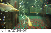 Купить «Fishes at oceanarium», видеоролик № 27209061, снято 5 октября 2016 г. (c) Илья Шаматура / Фотобанк Лори