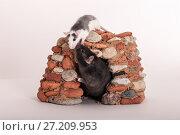 Купить «House for rats», фото № 27209953, снято 11 сентября 2012 г. (c) Argument / Фотобанк Лори