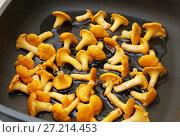 Купить «Лисички жарятся на сковороде», эксклюзивное фото № 27214453, снято 16 июля 2017 г. (c) Dmitry29 / Фотобанк Лори