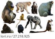 Купить «collection of different monkeys», фото № 27218925, снято 23 апреля 2019 г. (c) Яков Филимонов / Фотобанк Лори