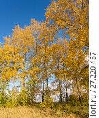 Купить «Autumn sunny landscape», фото № 27220457, снято 7 октября 2012 г. (c) Argument / Фотобанк Лори