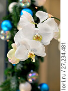 Купить «White Orchid Phalaenopsis Hybrid on background of Christmas garlands», фото № 27234481, снято 21 ноября 2017 г. (c) Валерия Попова / Фотобанк Лори