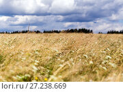 Купить «Green meadow blue sky with clouds and edge of forest», фото № 27238669, снято 1 августа 2015 г. (c) Евгений Ткачёв / Фотобанк Лори
