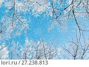 Купить «Winter landscape. Frosty branches of the winter trees against blue sky. Winter background», фото № 27238813, снято 11 января 2010 г. (c) Зезелина Марина / Фотобанк Лори