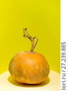 Купить «Натюрморт со спелой тыквой на жёлтом фоне», фото № 27239885, снято 25 ноября 2017 г. (c) V.Ivantsov / Фотобанк Лори