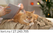 Купить «red tabby cat and woman reading book at home», видеоролик № 27243705, снято 24 ноября 2017 г. (c) Syda Productions / Фотобанк Лори