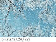 Купить «Winter landscape - frosty branches of the winter trees against blue sky. Winter landscape scene», фото № 27243729, снято 11 января 2010 г. (c) Зезелина Марина / Фотобанк Лори