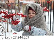 Деревенская девочка в зимней одежде с веткой калины стоит на заснеженном дворе. Стоковое фото, фотограф Марина Володько / Фотобанк Лори