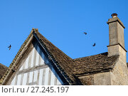 Купить «Common swift (Apus apus) group screaming as they fly over the roof of a cottage, Lacock, Wiltshire, UK, June.», фото № 27245197, снято 14 июля 2020 г. (c) Nature Picture Library / Фотобанк Лори