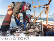 Купить «Fishermen harvesting scallops from a scallop dredge on a scallop boat. Cousins Island, Maine, USA, January. Model released.», фото № 27252909, снято 12 декабря 2017 г. (c) Nature Picture Library / Фотобанк Лори