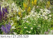 Купить «Полевые цветы и травы», эксклюзивное фото № 27255529, снято 20 июля 2017 г. (c) Елена Коромыслова / Фотобанк Лори