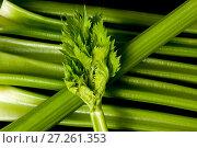 Купить «Background of green fresh petioled celery», фото № 27261353, снято 5 октября 2017 г. (c) Катерина Белякина / Фотобанк Лори