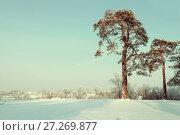 Купить «Winter landscape. Frosty high pine winter trees in winter forest and houses on the background», фото № 27269877, снято 7 декабря 2017 г. (c) Зезелина Марина / Фотобанк Лори