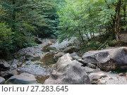 Купить «Горная река в лесу», фото № 27283645, снято 27 сентября 2017 г. (c) виктор химич / Фотобанк Лори
