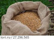 Мешок с пшеницей. Стоковое фото, фотограф Литвяк Игорь / Фотобанк Лори
