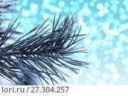 Купить «Pine branches in the frost», фото № 27304257, снято 18 декабря 2016 г. (c) Евгений Ткачёв / Фотобанк Лори
