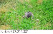 Купить «Gray cat on green grass from the back.», видеоролик № 27314221, снято 12 июля 2017 г. (c) Володина Ольга / Фотобанк Лори