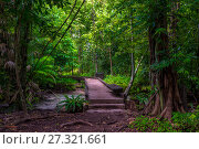 Купить «a path in a dense tropical forest in Krabi, Thailand - the path to the blue lake», фото № 27321661, снято 12 ноября 2016 г. (c) Константин Лабунский / Фотобанк Лори