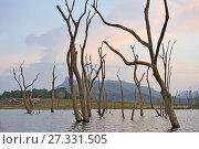 Купить «Senanayake Samudraya Lake, Gal Oya National Park, Sri Lanka, Indian subcontinent, South Asia.», фото № 27331505, снято 22 сентября 2017 г. (c) age Fotostock / Фотобанк Лори