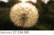 Купить «Dandelion in a hand», видеоролик № 27334385, снято 26 июня 2017 г. (c) Илья Шаматура / Фотобанк Лори