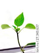 Купить «Green sprout on a windowsill», фото № 27343637, снято 12 апреля 2015 г. (c) Евгений Ткачёв / Фотобанк Лори