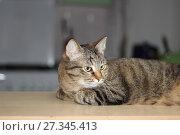 Купить «Кот на подоконнике», фото № 27345413, снято 14 декабря 2017 г. (c) Валерий Денисов / Фотобанк Лори