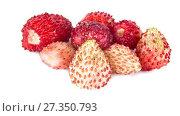 Купить «Berries of ripe strawberries. HD video», видеоролик № 27350793, снято 5 января 2018 г. (c) Parmenov Pavel / Фотобанк Лори