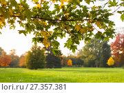 Купить «Autumn leaves and trees in Versailles park», фото № 27357381, снято 17 октября 2017 г. (c) Сурикова Ирина / Фотобанк Лори