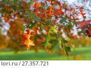 Купить «Autumn leaves and trees in Versailles park», фото № 27357721, снято 17 октября 2017 г. (c) Сурикова Ирина / Фотобанк Лори