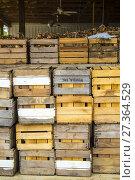 Купить «Cases of Onions in bulk, red and yellow, laying in an onion farm, in Virginia, Usa», фото № 27364529, снято 26 августа 2017 г. (c) age Fotostock / Фотобанк Лори