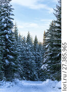 Купить «Spruce forest in winter», фото № 27385965, снято 18 декабря 2016 г. (c) Евгений Ткачёв / Фотобанк Лори