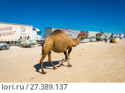 Купить «The camel walks along a convoy on 22 August 2016 at the customs point, Kazakhstan», фото № 27389137, снято 22 августа 2016 г. (c) Валерий Смирнов / Фотобанк Лори
